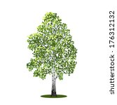 detached tree birch with leaves ...   Shutterstock .eps vector #176312132