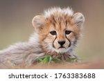 A Close Up Of A Small Cheetah...