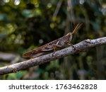 Beautiful Grasshopper  An Imag...