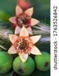 Six Petal Pomegranate Fruit Bu...