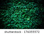 Background With Ivy Leafs