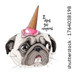 Portrait Of A Funny Pug Dog In...