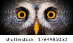 Big yellow eyes of a owl close...