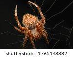 Super Macro Photo Of Spider...