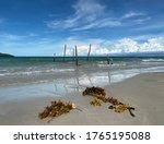 Seaweed On Beach Sand....
