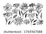 chamomile hand drawn black...   Shutterstock .eps vector #1765567088