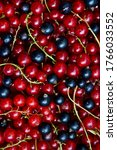 currant black and red. berries... | Shutterstock . vector #1766033552