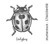 Vintage Sketch Of Ladybug...
