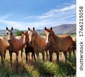 Beautiful Horses In The Pastur...