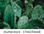 Decorative Green House Cacti....