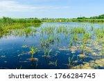 View On A Small Lake At Summer