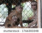Monkey Family In A Zoo Cage Are ...