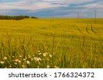 Landscape   a wheat field on a...