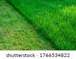 Partially Cut Grass Lawn. Green ...