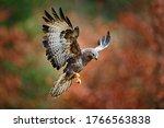 Autumn wildlife  bird of prey...