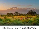 Mount Killimanjaro In Morning...