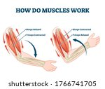 how do muscles work labeled... | Shutterstock .eps vector #1766741705