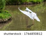 Great Egret Also Known As The...
