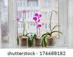 Orchid Plants By The Window