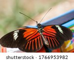 Red  Black And White Butterfly...