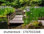 Iris Blooming At The Koi Pond...
