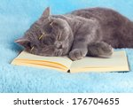 Stock photo a blue british cat is wearing glasses lying and sleeping on the book 176704655