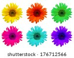 sunflower | Shutterstock . vector #176712566