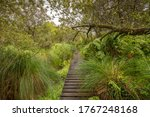 Wooden Walkway Through A Fores...