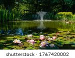 Magical garden pond with...