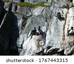 Cormorate On The Rock Of The...