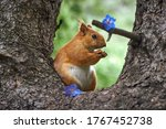 Squirrel In The Mountains Of...