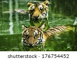 tigers are in the nature of the ... | Shutterstock . vector #176754452