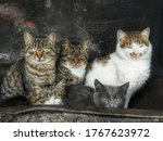 Group Of Gray Stray Cats Famil...