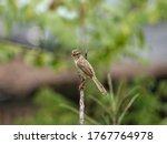 Little Bird Singing On Tree...