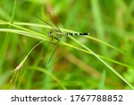 A Beautiful Green Dragonfly...