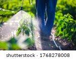 Farmer Spraying Vegetable Green ...