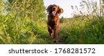 A Joyful Dog Runs Along A Path...