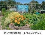 Dutch Allotment Garden With...
