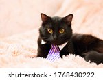 Black Cat In Tie Looking Cute...