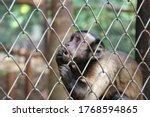Captive Monkey Inside A Cage
