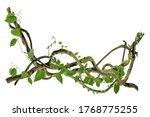 Circular vine at the roots....