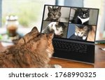 Small photo of Back view of cat talking to cat friends in video conference. Group of cats having an online meeting in video call using a computer. Focus on cats, blurred background.