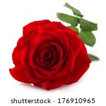 Stock photo red rose isolated on white background 176910965