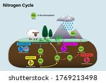 Diagram Of Nitrogen Cycle ...