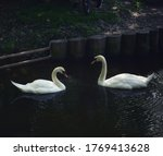An Eternal Pair Of Swans For...
