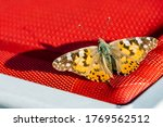 A Small Butterfly On A Sunny...
