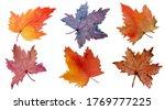 Set Of Varieties Of Autumn...