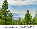 view throght the pines to the... | Shutterstock . vector #1769954492