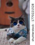 Domestic Medium Hair Cat In...