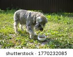 dog staying near white bowl on... | Shutterstock . vector #1770232085